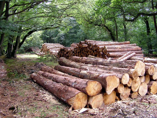 Eight Months of Soaring Timber Price Rises: When Will It End?