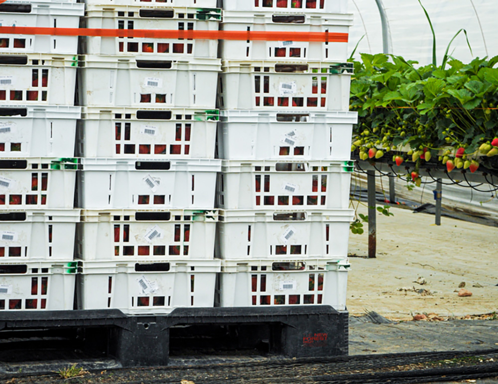 New plastic pallets for New Forest Fruit
